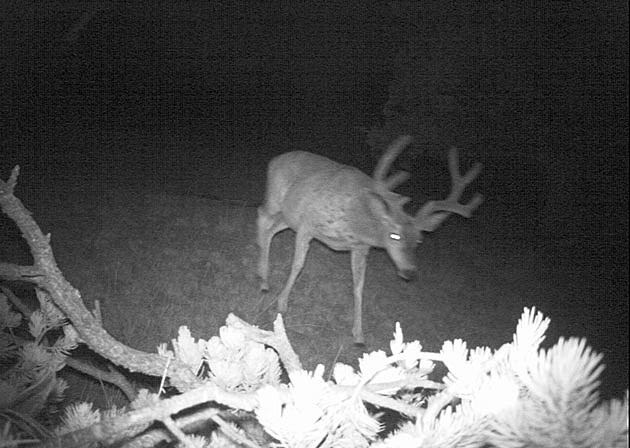 Trail Cam Contest