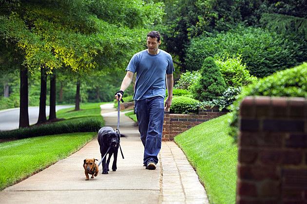 Man walking dogs down sidewalk
