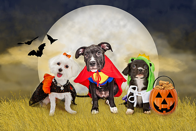 Popular Halloween Costumes for Pets